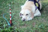 Hluchoslepým lidem při chůzi pomáhá červenobílá hůl