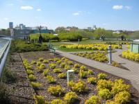 Biblioteka Uniwersytecka w Warszawie - střešní zahrada